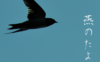 暗夜の白百合 – 天安門事件十七年忌