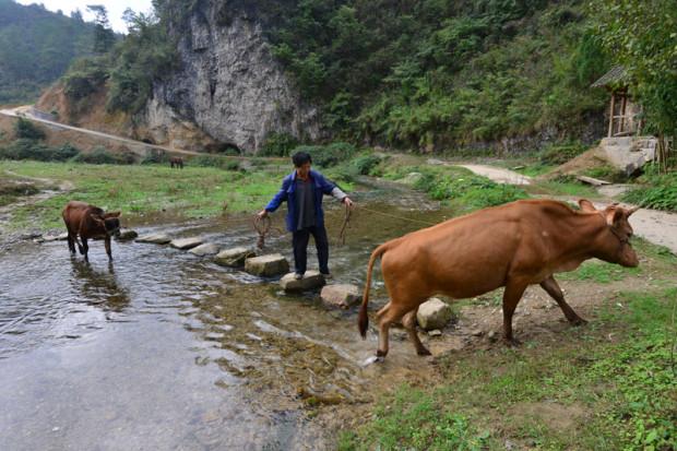 村人たちは農業や畜産を兼業
