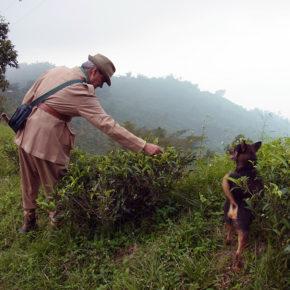 インド人が紅茶を飲み始めた──人間の欲望とは