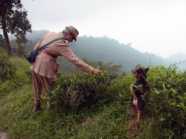茶園主と大自然の茶畑を散歩