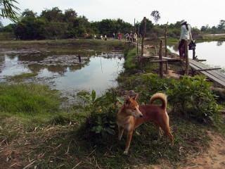 カンボジア 夕方暗くなる前に帰宅し、夕飯と水浴び