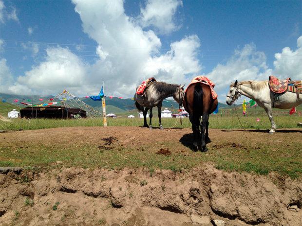 観光アトラクションとしての遊牧民生活 撮影/筆者