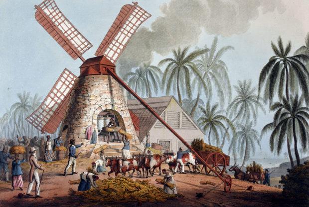 西インド諸島のサトウキビ・プランテーション(wikipedia)