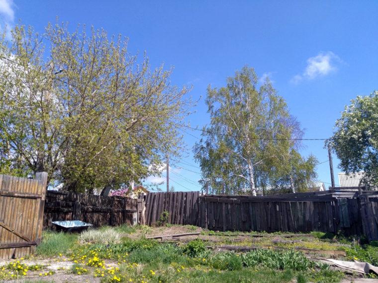 手入れされる前のダーチャの庭