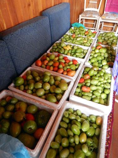 とあるダーチャで昨年、収穫されたトマト