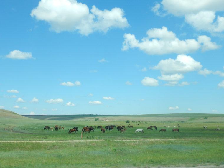 馬の放牧風景