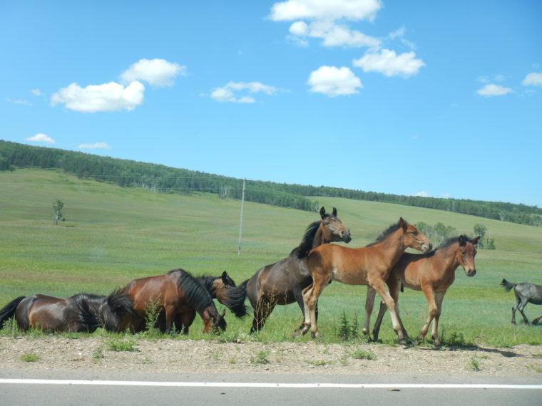 路傍でも人より家畜の方がずっと多い